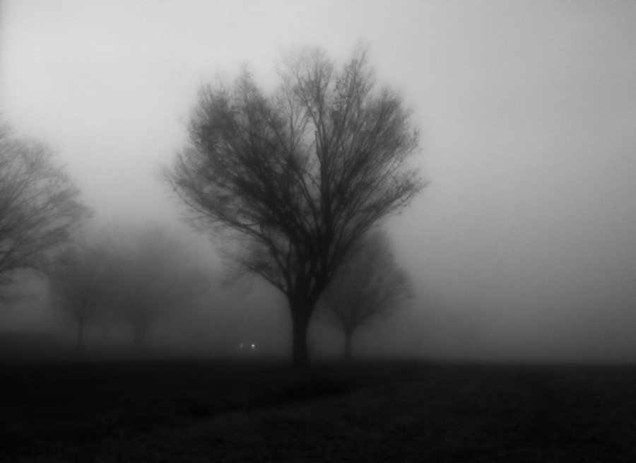 trees in the early morning fog